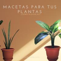 Macetas para tus plantas